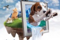 งาน สมาร์ทฮาร์ท พรีเซนต์ เพ็ทวาไรตี้ 2016 สิ่งมหัสจรรย์ของโลกสัตว์เลี้ยง ณ อิมแพ็ค เมืองทองธานี วันนี้ ถึง 9 ตุลาคม 2559