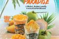 โปรโมชั่น คาเฟ่ อเมซอน SUMMER PARADISE เครื่องดื่ม เมนูใหม่ รับซัมเมอร์ ที่ Café Amazon วันนี้ ถึง 30 มิถุนายน 2561